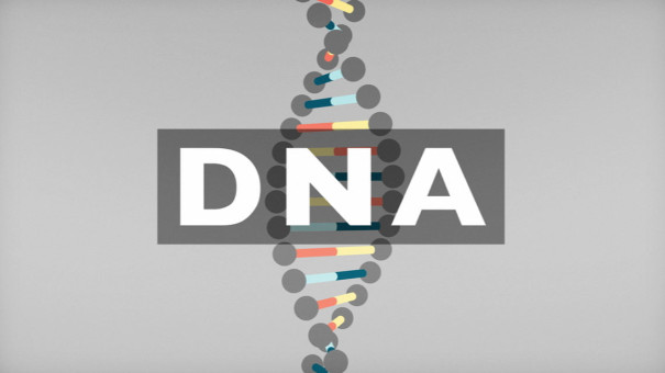 DNA_Knowledge_DNA_01